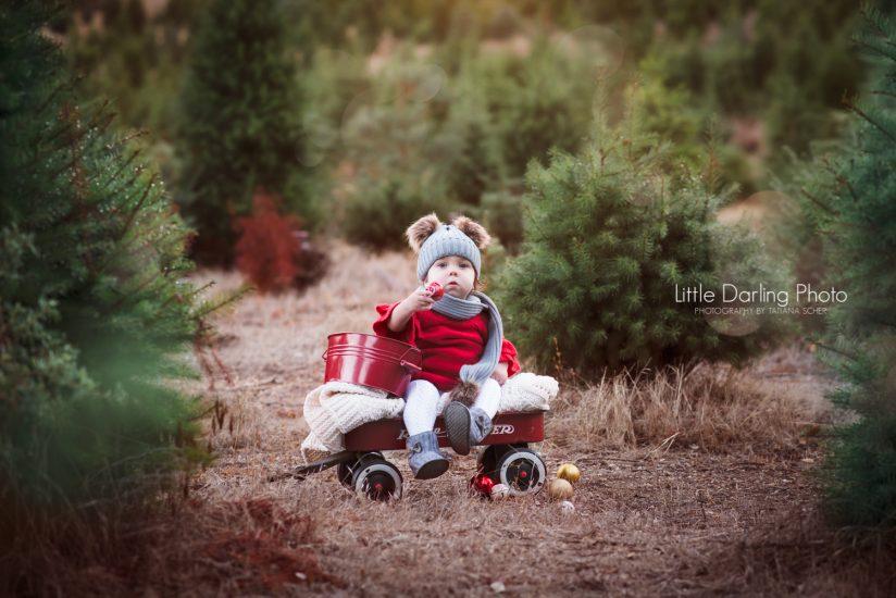 Christmas tree ranch holiday photography