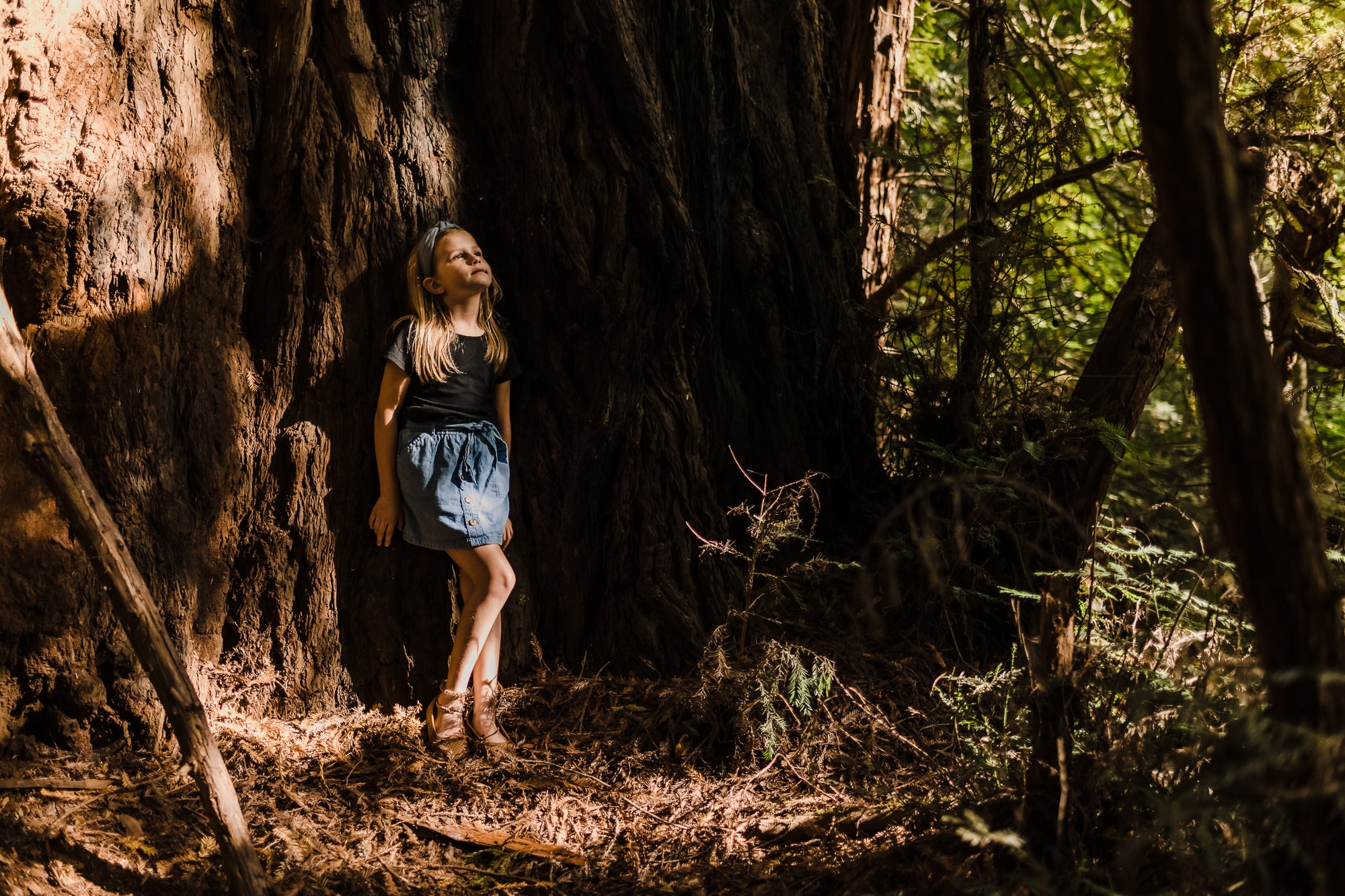 Redwoods family photography
